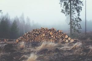 Preservación de Recursos Naturales